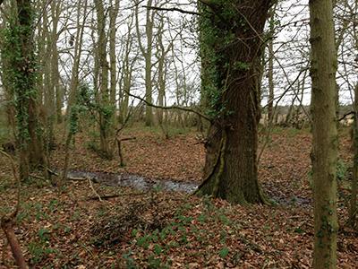 a wood ditch