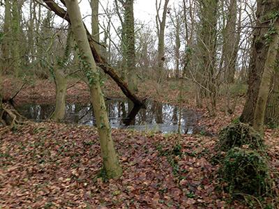 a wood pond