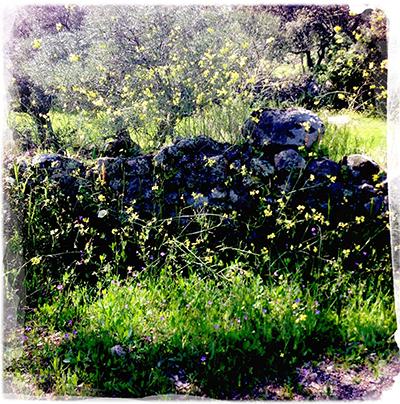 1sun flowers wall
