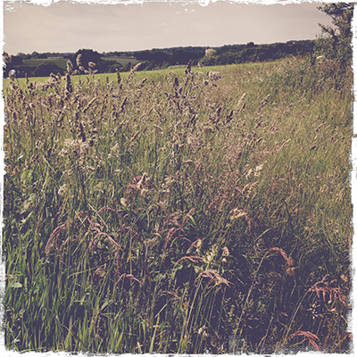 1grasses
