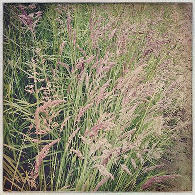 1grasses2
