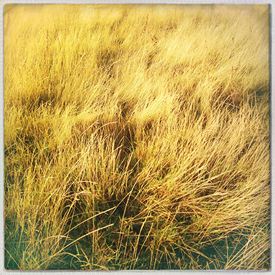 1 grass field yellow