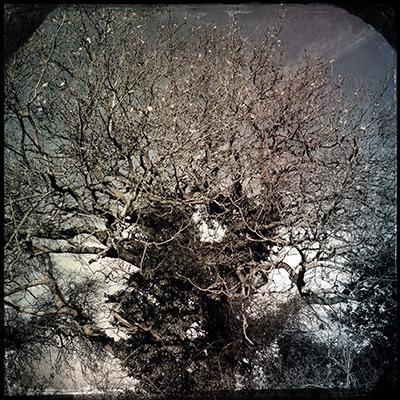 1 magic tree