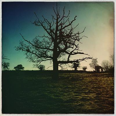 1 pasture treedead