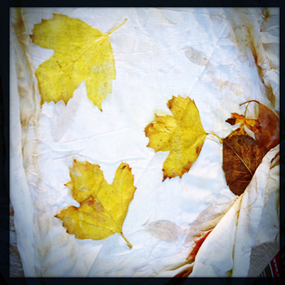 2 mapleleaves