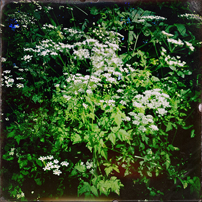 2roughchervil