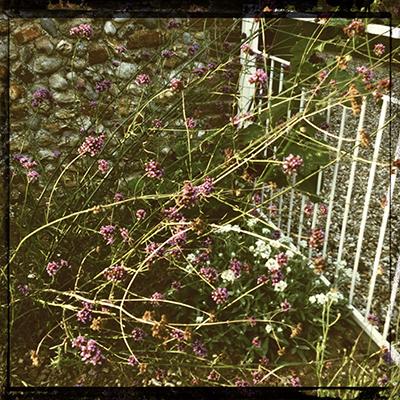 bigpotsummerflower