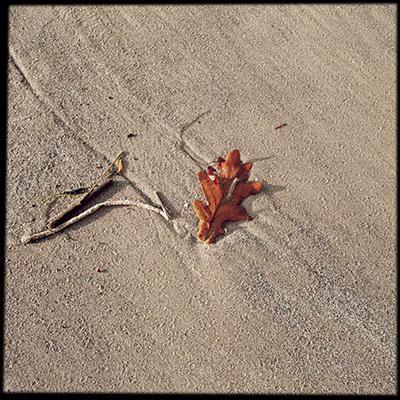 leafbeach