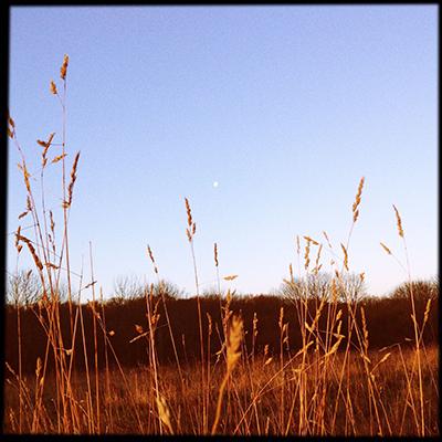 moonandgrass
