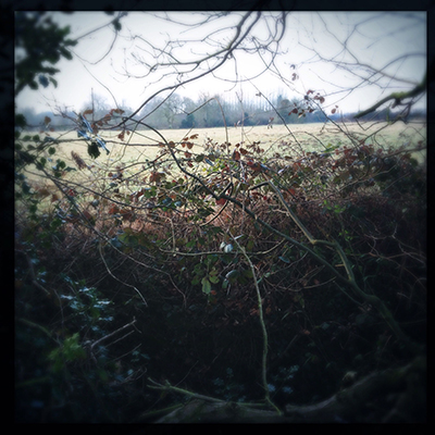bramble view