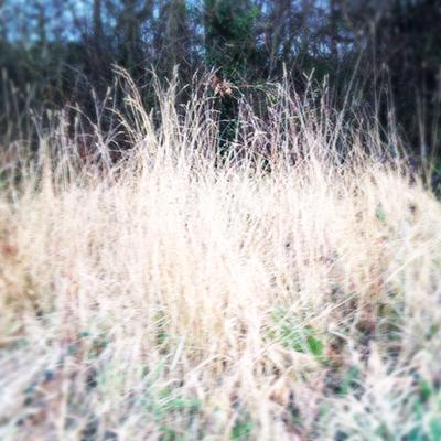 frostbleachedgrass