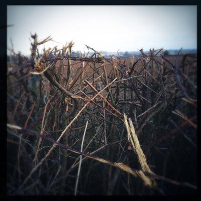 hedgecut