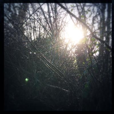 sunraindrops