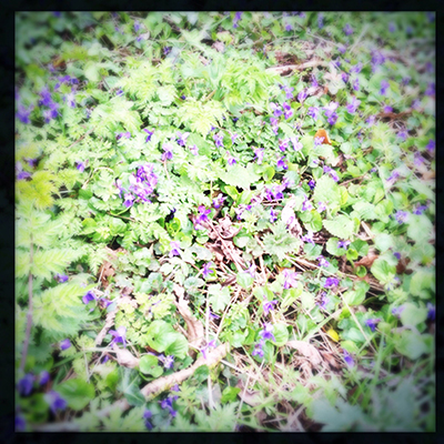 violetmat