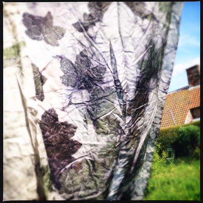 sycamoreon silk