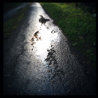 early morning puddle