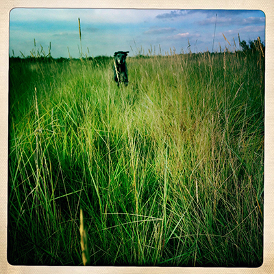 0tildarushinggrass