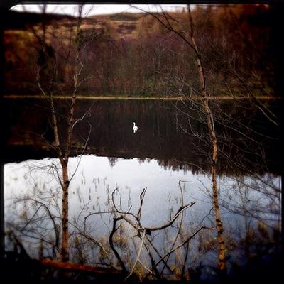 Loch Ord Dunkeld swan