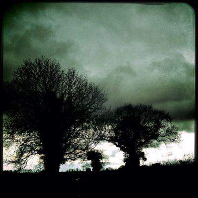 inkblottrees